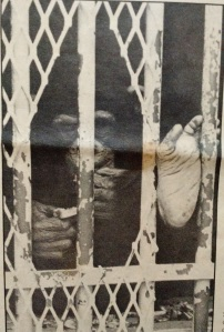 Chimpanzee at Lowry Park Zoo - 1972