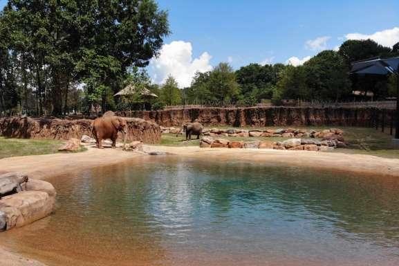 elephant_ZA_0844-1