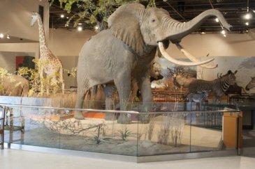 delbrige-museum-elephant-crop-1250x400-43bd9